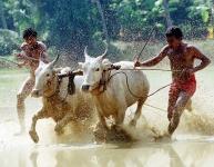 Farmers-festival